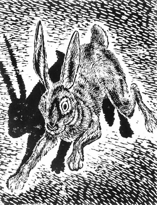 konijn-featured